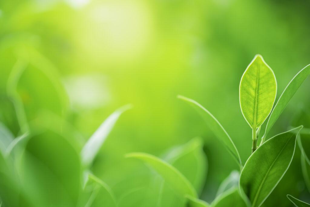medioambiente en Ozonyx